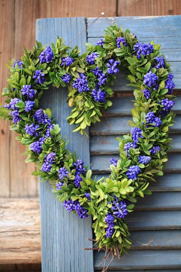 Drzwiowy wianek w kierowym kształcie z boxwood i gronowym hiacyntem kwitnie obrazy royalty free