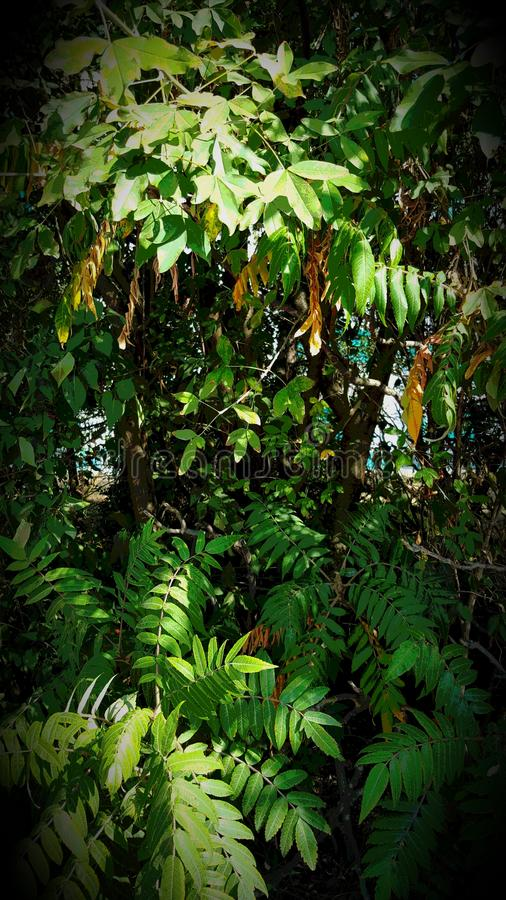 Dschungel感觉 免版税库存图片