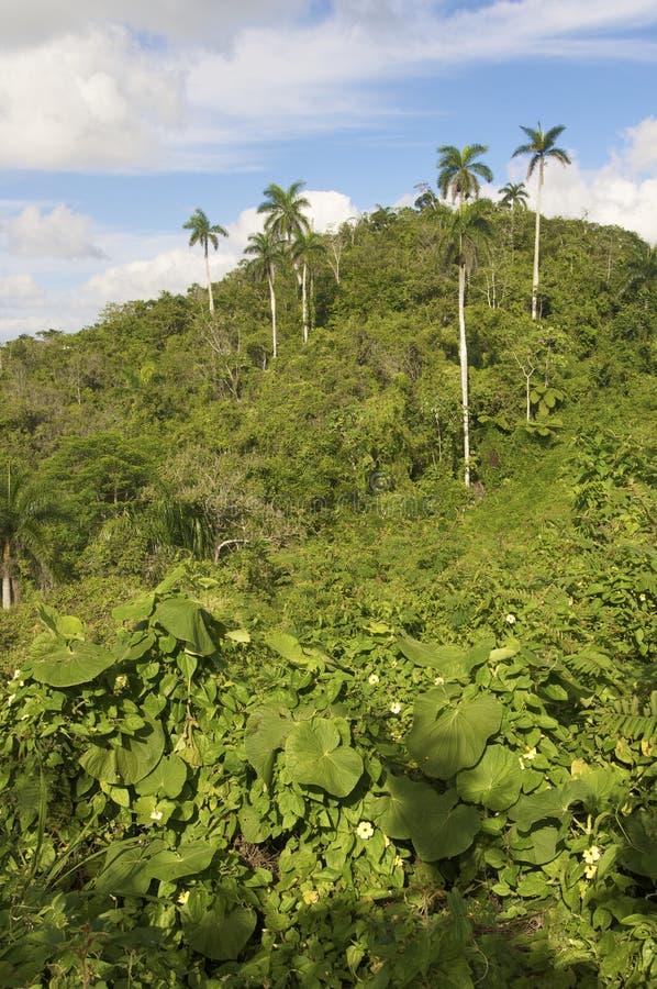Dschungel stockfotografie