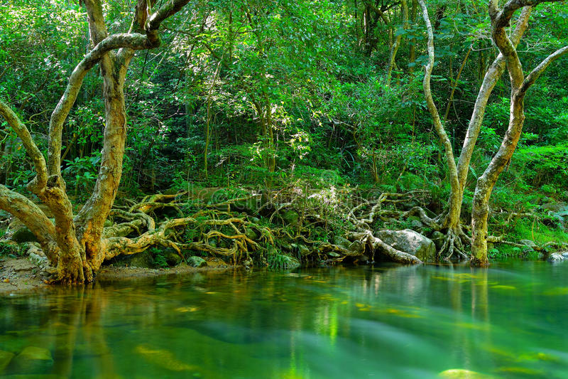 Dschungel lizenzfreie stockfotografie