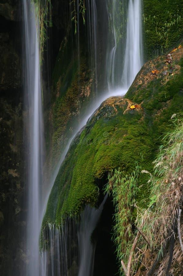 Dschungel stockbilder