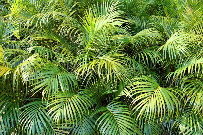 Dschungel lizenzfreie stockfotos