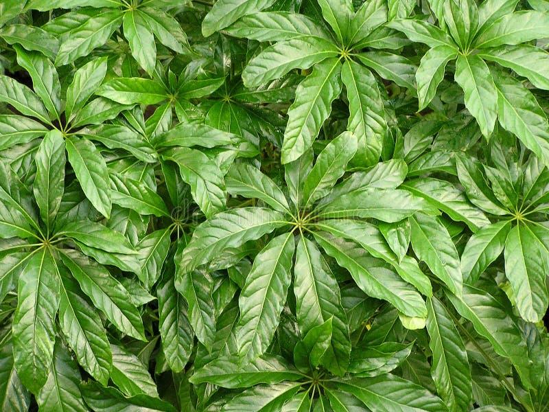 Dschungel-Blatt-Beschaffenheit 1 lizenzfreie stockbilder