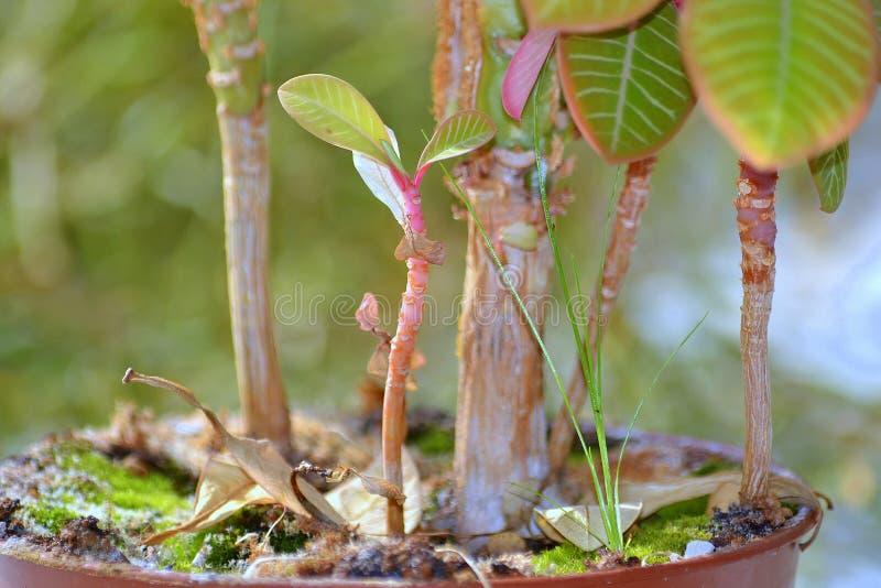 Dschungel in einem Blumentopf stockfoto