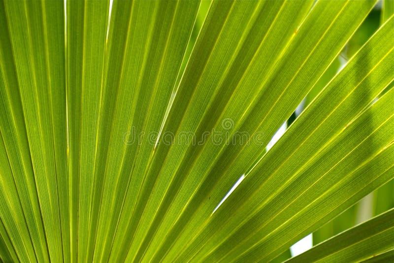 Dschungel-Hintergrund lizenzfreie stockfotos