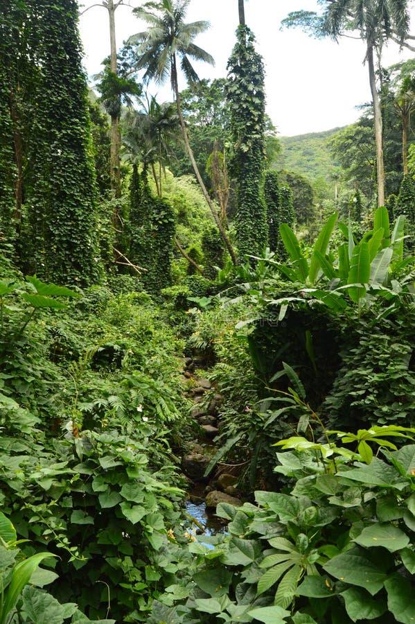 Dschungel-Insel nach einem Morgen des Regens stockfotos
