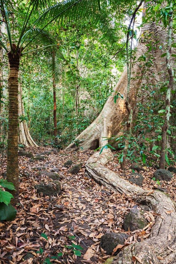 Dschungel in Nam Cat Tien National Park Southern Vietnam Immergrüner tropischer Wald stockfoto