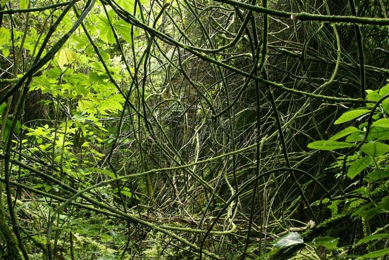 Dschungel-Reben lizenzfreie stockfotos