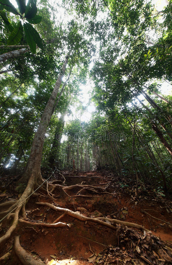 Dschungel-Trekking lizenzfreie stockfotos