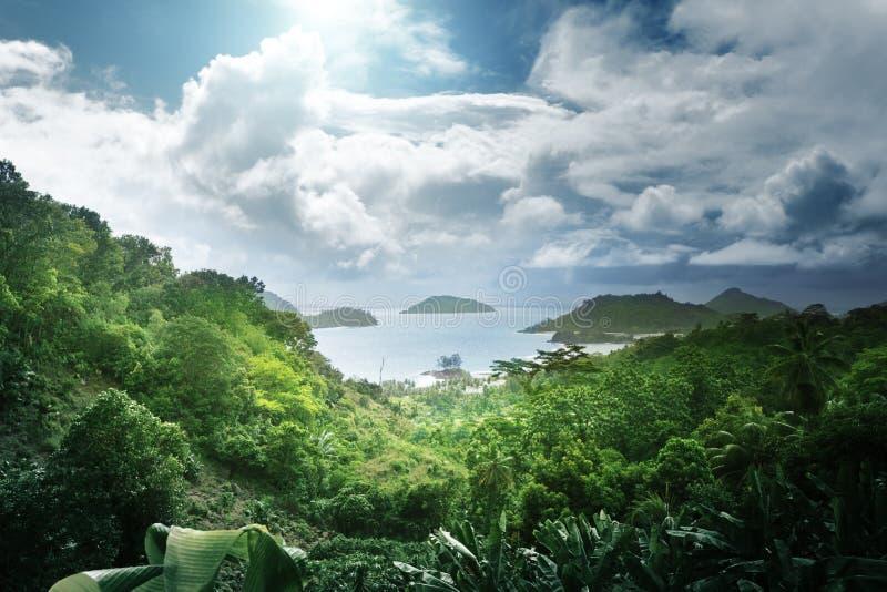Dschungel von Seychellen-Insel stockfotografie