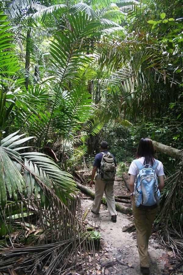 Dschungel-Wanderung stockfoto