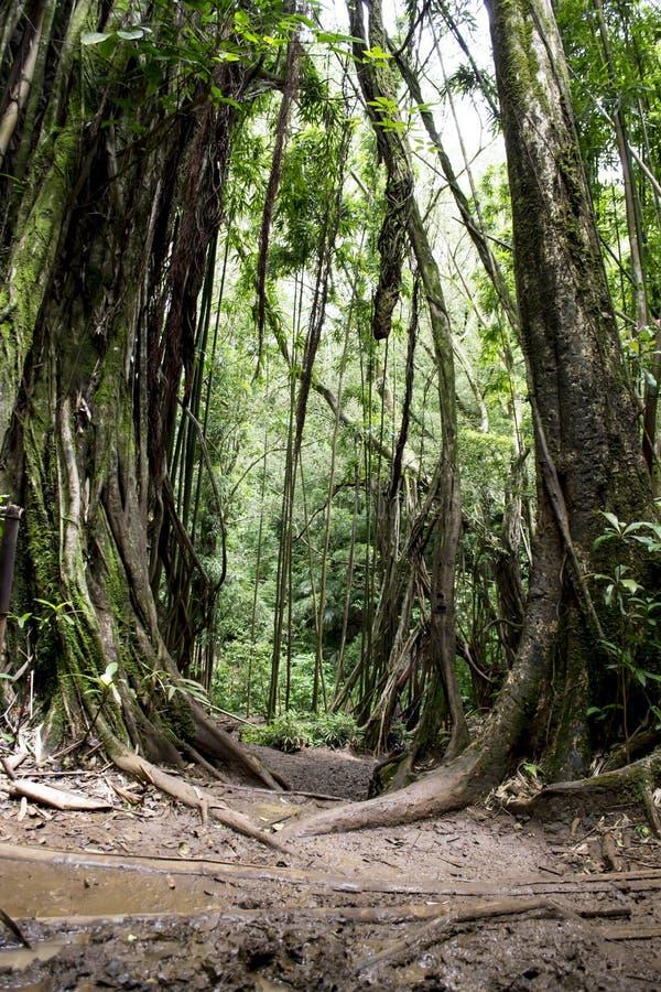 Dschungelbrücke stockbild