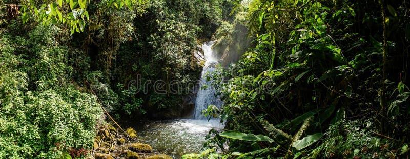 Dschungeleinstellung mit Wasserfall im Cloudbridge-Naturreservat, Costa Rica stockfotografie