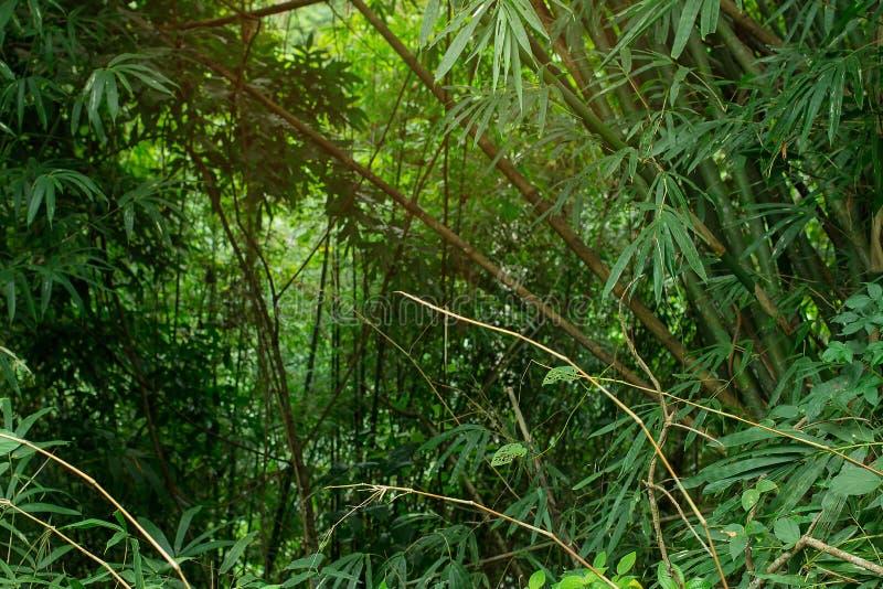 Dschungelgrün mit dem Kopienraumbereich und warmem feuchtem luftigem Sonnenlicht, die herein von der Spitze fließen Frischluft un lizenzfreie stockfotografie