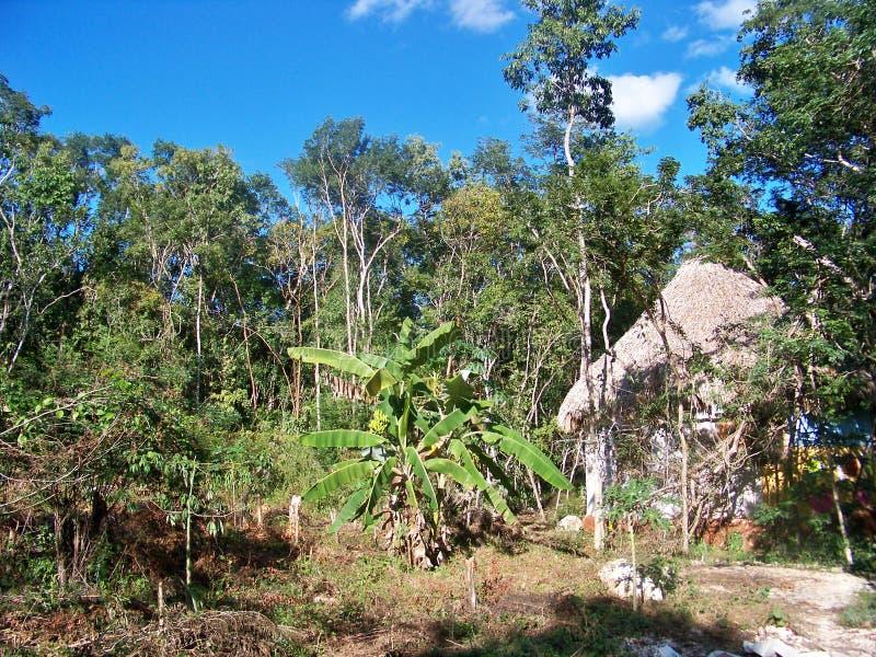 Dschungelhütte stockfotos