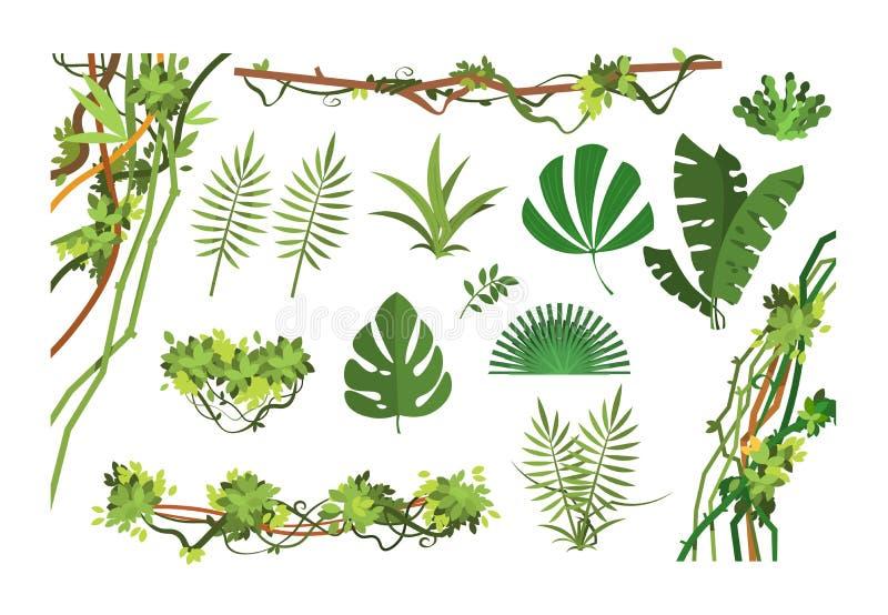 Dschungelrebe Karikaturregenwaldblätter und überwucherte Anlagen der Liane Lokalisierter Vektorsatz vektor abbildung