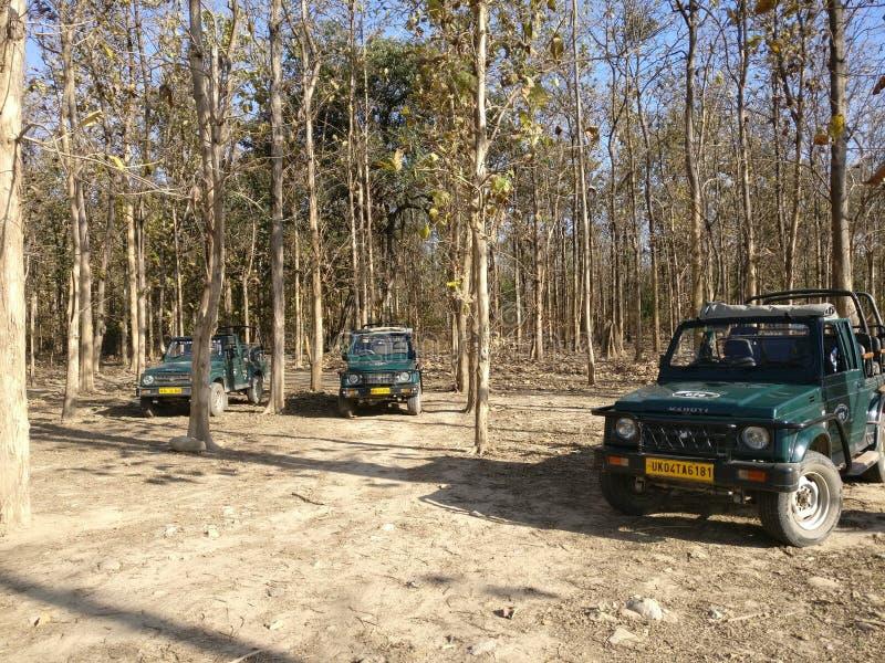 Dschungelsafari auf Jeep stockfotos