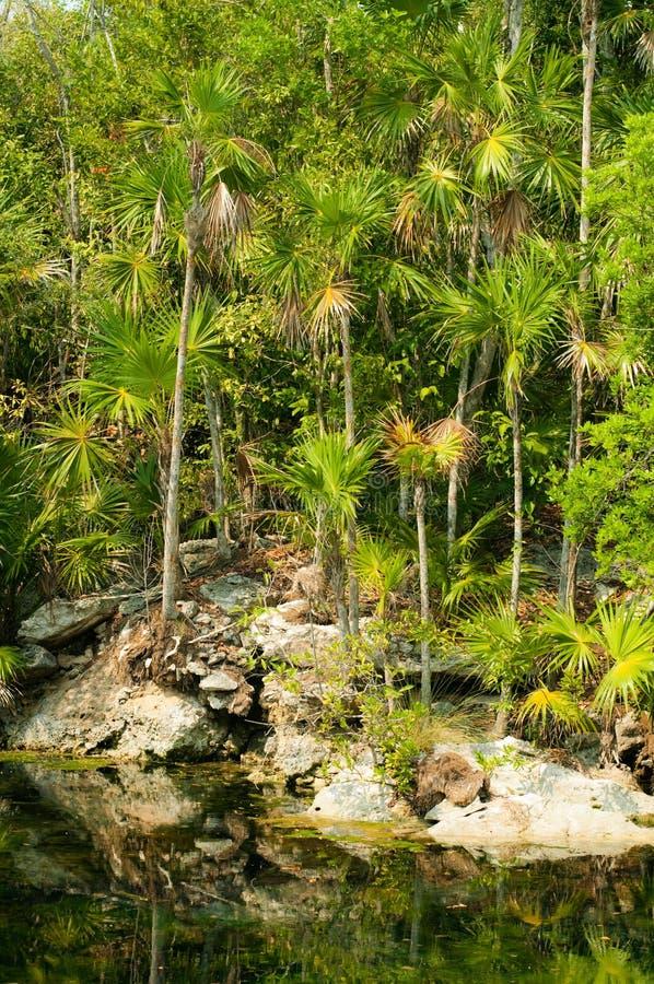 Dschungelteich stockbilder