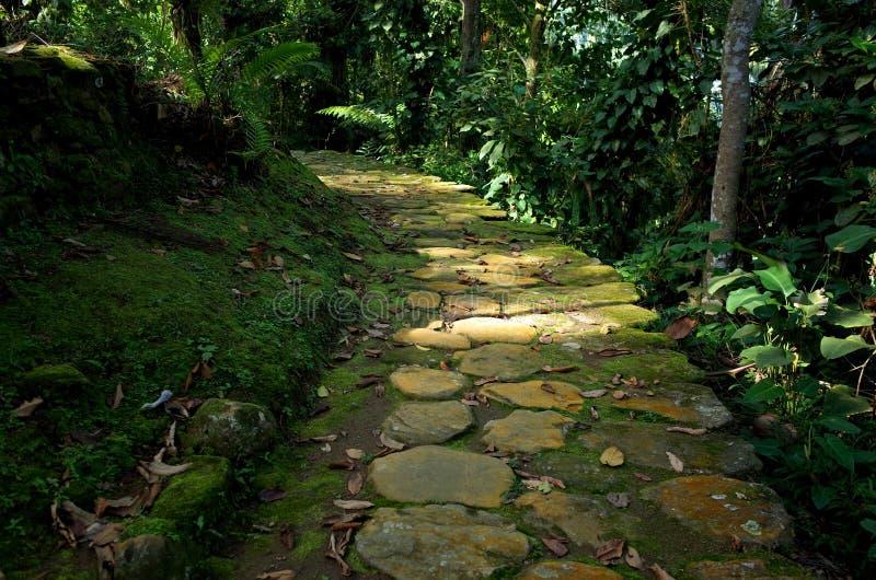 Dschungelweg stockbilder