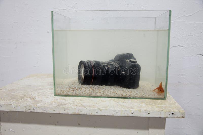 Dslr cyfrowa kamera zanurzająca w akwarium obrazy royalty free