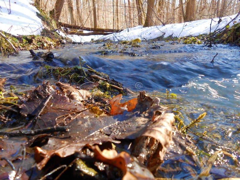 Duży strumień w lesie fotografia stock