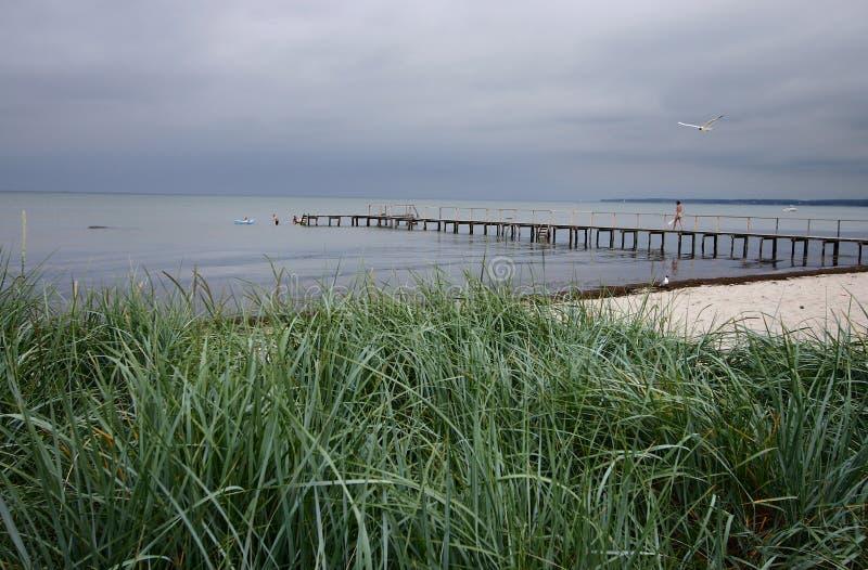 duński na plaży fotografia royalty free