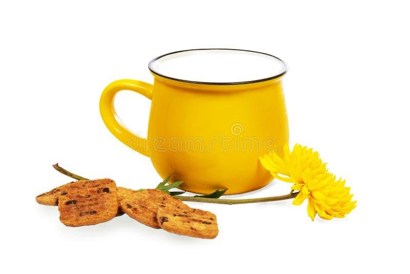 Duża żywa żółta filiżanka mleko, ciastka i piękny chryzantema kwiat odizolowywający na białym tle, fotografia royalty free