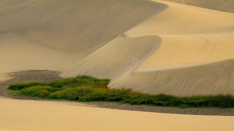 Duża kępa trawa na piasek diunach dezerteruje obrazy stock