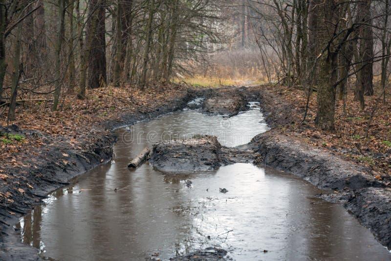 Duża kałuża na bekowisko drodze w lesie fotografia royalty free