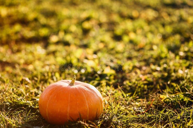 Duża pomarańczowa bania na trawie outdoors obrazy stock
