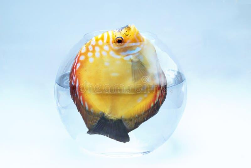duża ryba obrazy royalty free
