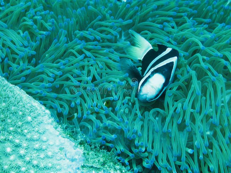 Duża rybia Mała ryba zdjęcia royalty free