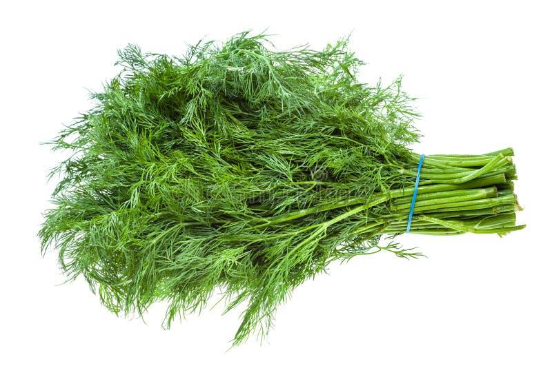 Duża wiązka świeży zielony koperkowy ziele odizolowywający obrazy stock