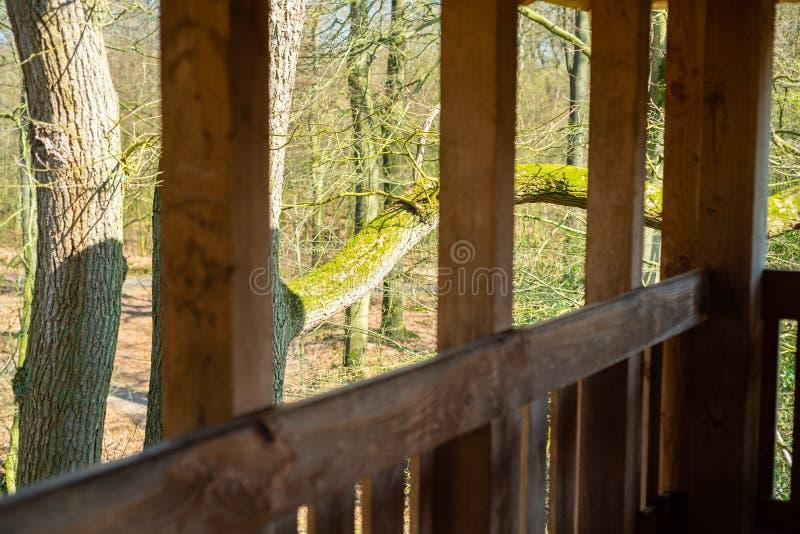 Duża wysokość w naturalnym lesie zdjęcia royalty free