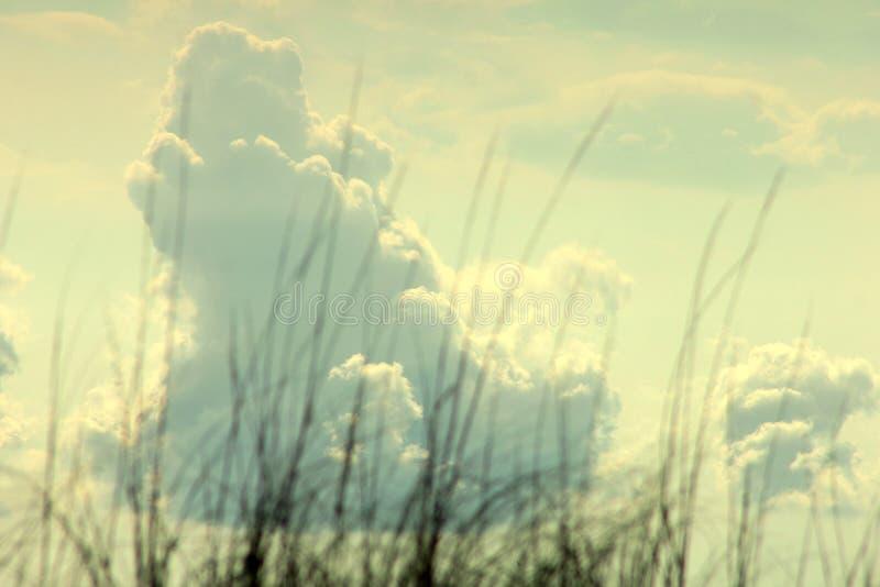 Duże bufiaste chmury nad denną trawą zdjęcie stock