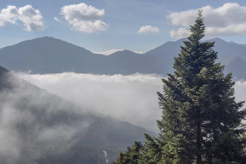 duże krajobrazowe halne góry Świerczyna przeciw tłu góry i mgła w jesieni, chmurzy ranek Grecja, Peloponnese zdjęcie stock
