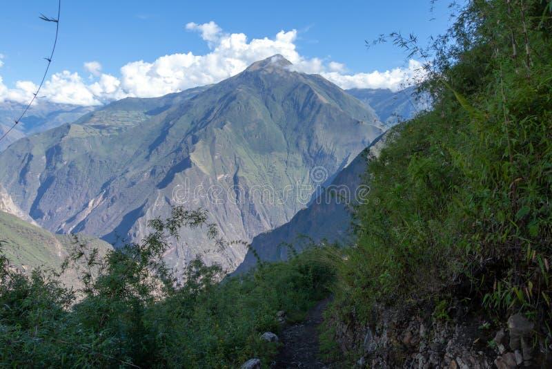 Dużej wysokości dżungli luksusowa flora w zielonej Rio Bianco dolinie po Choquequirao przepustki, Andes, Peru obraz stock