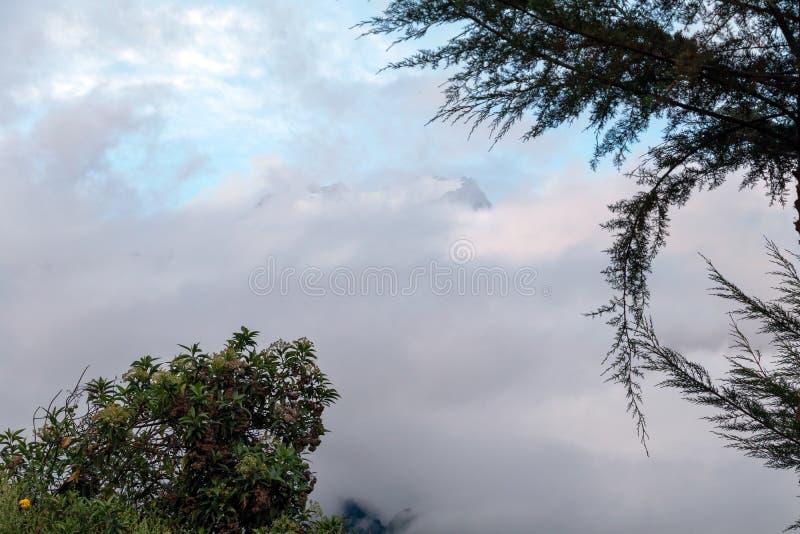 Dużej wysokości dżungli luksusowa flora w zielonej Rio Bianco dolinie po Choquequirao przepustki, Andes, Peru obrazy stock