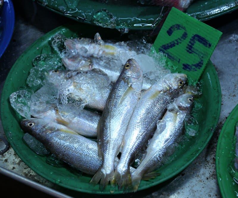 Download Dużo łowią W Targowym Schronieniu Zdjęcie Stock - Obraz złożonej z menu, zdrowy: 53776014