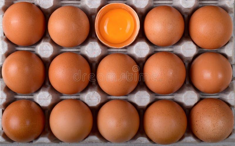 Dużo brązowić kurczaka jeden z i jajka łamanymi skorupami i jaskrawym yolk w gniazdeczkach fotografia stock