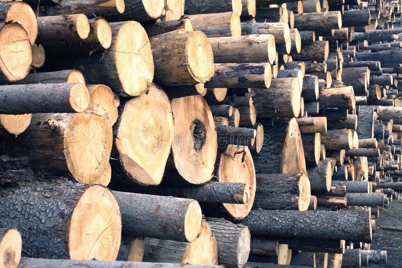 Download Dużo Brogujący Piłowali Sosnowego Beli Zbliżenie Obraz Stock - Obraz złożonej z środowisko, brąz: 53781273