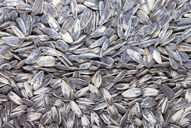 Dużo piec słonecznikowych ziarna przyrodnich z udziałami sól i drugą połową z trochę obrazy royalty free