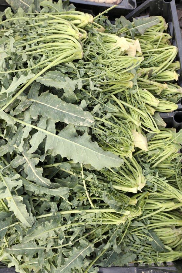 Dużo Zielenieją brokuły dzwoniących BROKUŁ FIOLARO w Włoskim języku zdjęcie royalty free
