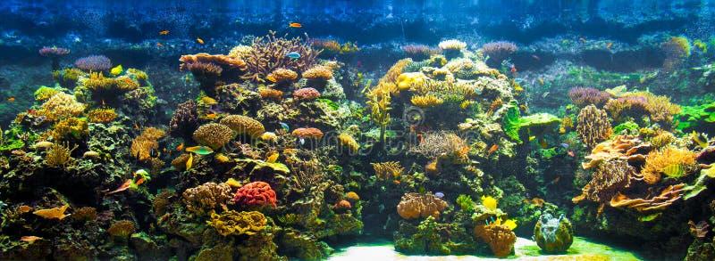 duży akwarium panorama obrazy royalty free