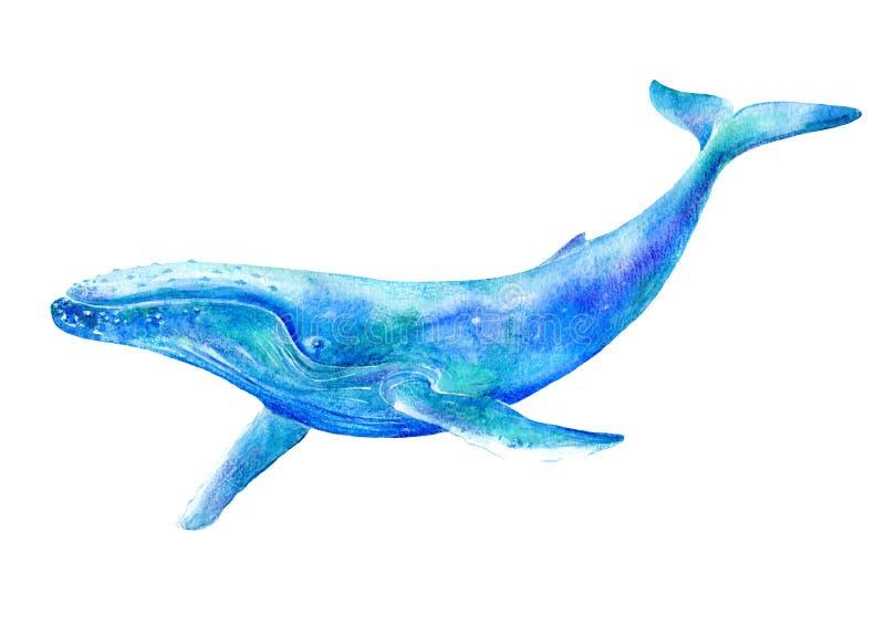 Duży błękitny wieloryb Akwareli ręka rysująca ilustracja ilustracji