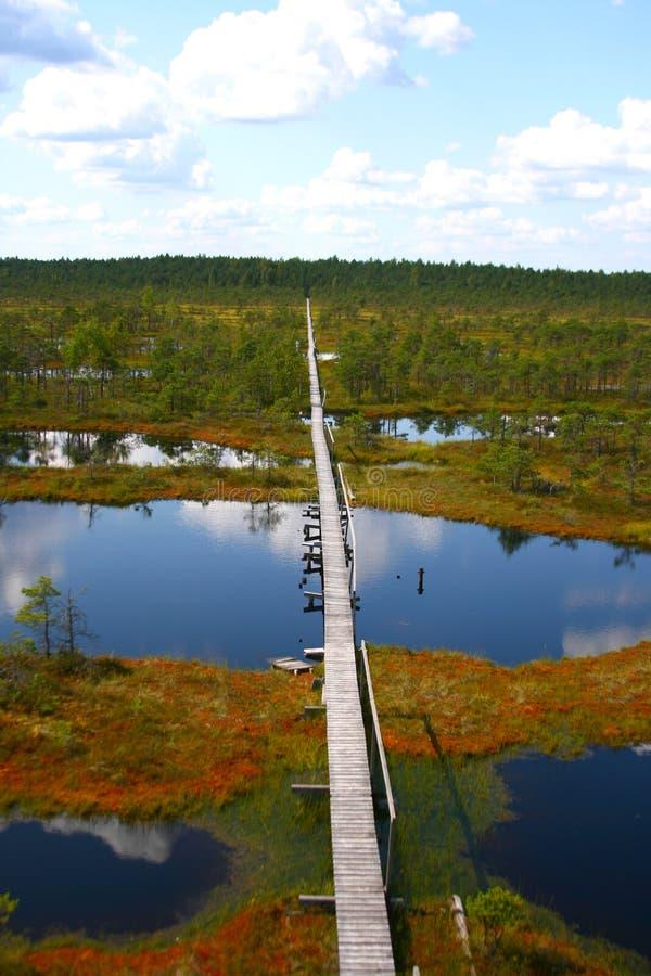 duży bagno Estonia zdjęcia royalty free