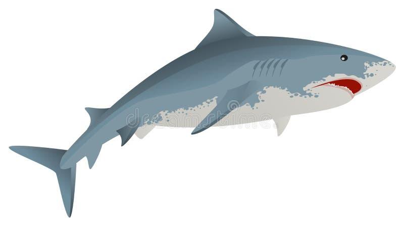Duży białego rekinu żołnierza piechoty morskiej drapieżnik ilustracji
