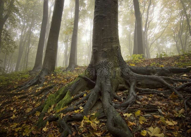 duży czarny pierwszych planów złoci korzenie drzewni zdjęcia stock