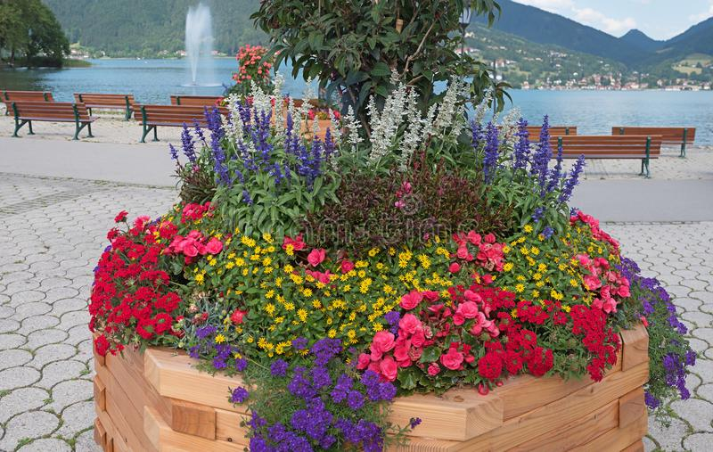 Duży drewniany kwiatu pudełko z kolorowym latem kwitnie przy jeziornym brzeg obraz royalty free
