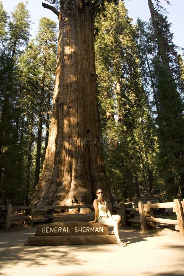 duży drzewo obraz stock
